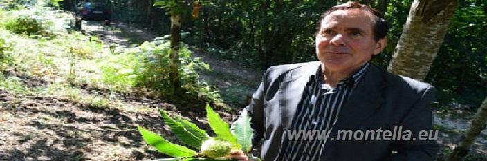 Malerba: castagneti sempre più deboli, hanno bisogno di cure