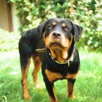 Aggressione da parte di un cane ad una giovane avvocatessa di Montella