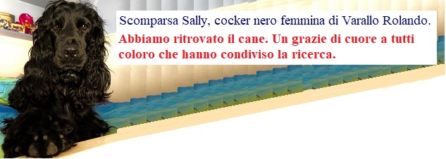 Scomparsa Sally, cocker nero femmina di Varallo Rolando